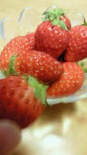 Iくんの苺